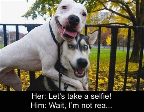 Gay Dog Meme - funny animal picture dump of the day 22 pics