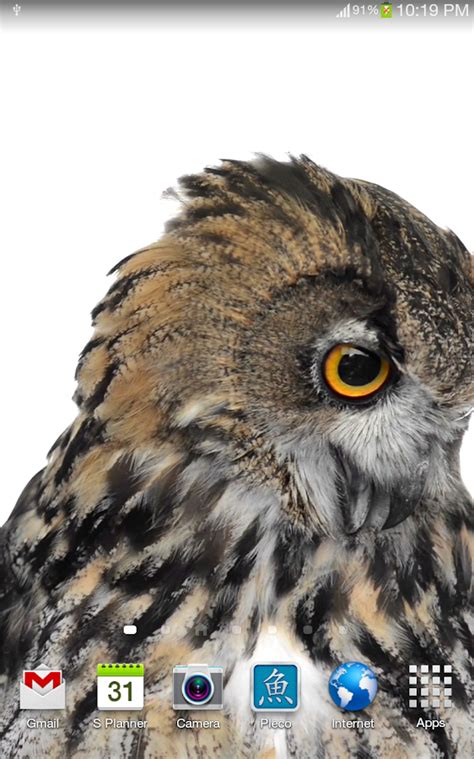 wallpaper android owl owl live wallpaper android apps on google play