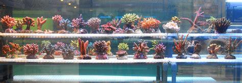 vasche per acquari marini aquarium 2000 acquari e pesci tropicali castel mella