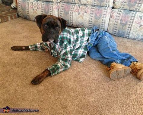 47 cute fun and scary halloween costumes for your boxer