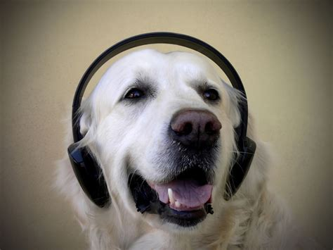 dogs soundtrack what do pets like animal psychologists discover what animals prefer