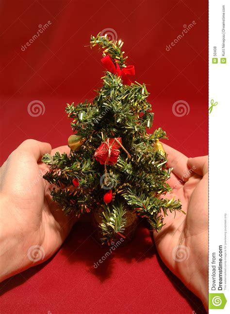 tiny christmas tree royalty free stock photos image 50408