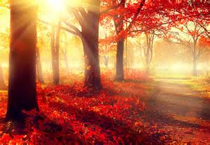 Autumn fall scene beautiful autumnal park beauty nature scene
