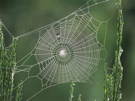 spiders web fascia the spider web of life institute for equine therapeutic options