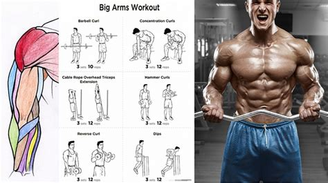 the best bicep workout for arm size workout chart