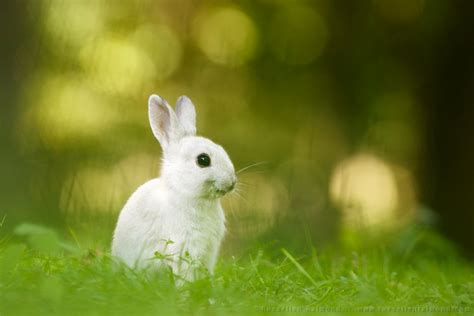 Snack Kelinci Bunny Nature the smiling rabbit roeselien raimond nature photography