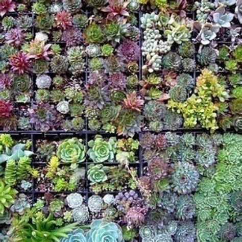 19 best outside succulent wall images on