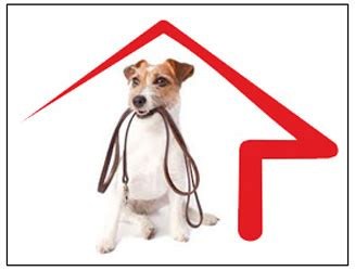become a house sitter benefits to be gained through being a pet or house sitter global directory for yoga
