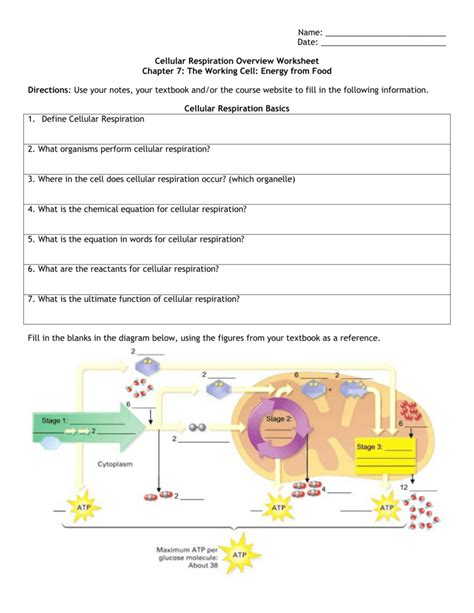 Cellular Respiration Worksheet by Uncategorized Cellular Respiration Worksheet Answer Key