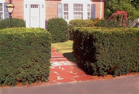 shrubs for front door entrances pictures of entryway plantings front door landscaping