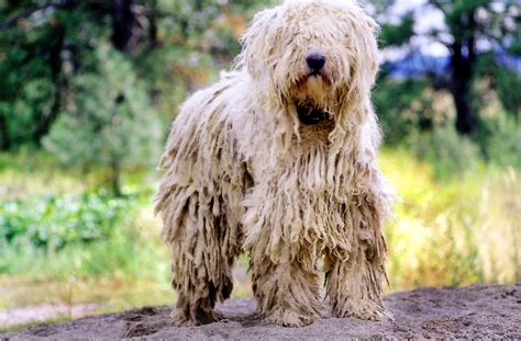 mop breed top 10 strangest looking breeds
