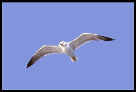 livingston gabbiano il gabbiano jonathan livingston richard bach
