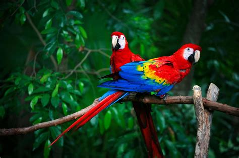 mexicanlove bird alberta neuroscientists find out why parrots are not so bird brained great lakes ledger