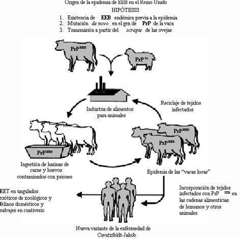 cadena alimenticia unam encefalite espongiforme bovina o mal da vaca louca