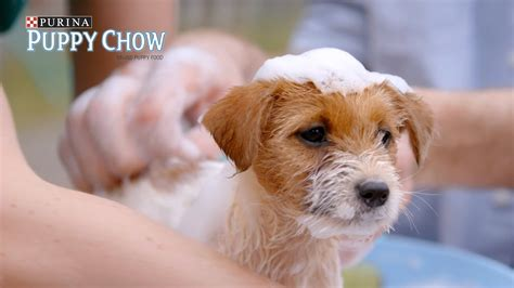 puppies buzzfeed when you walk your anxious puppy presented by buzzfeed puppy chow funnycat tv