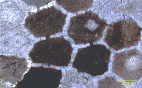 bryozoan thin section wooster geologists 187 blog archive 187 wooster s fossil of