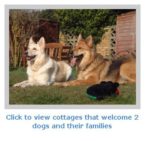 Cottages That Allow Dogs by Pet Friendly Cottages For Family Breaks Where 2