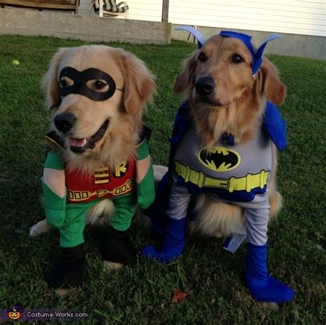 golden retriever costume 86 best golden retrievers in costume images on animals adorable
