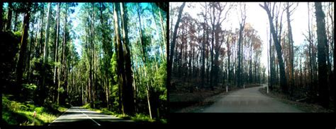 After Sadturday bushfires before and after by dopehat6 on deviantart