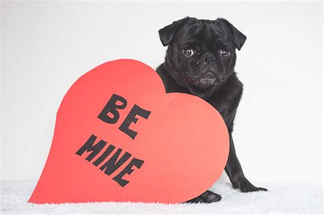 pug hearts diy pug photo props the pug diary