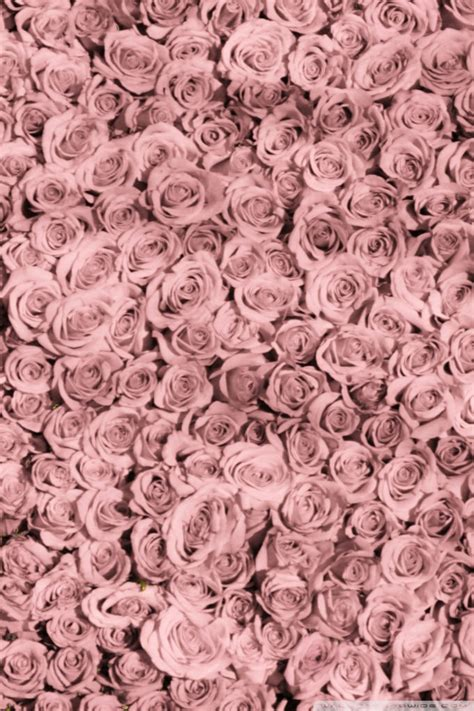 Vintage Pink Roses Tumblr Loading