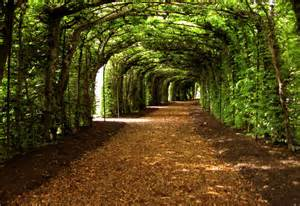 15 breathtaking tree tunnels canopies garden lovers club