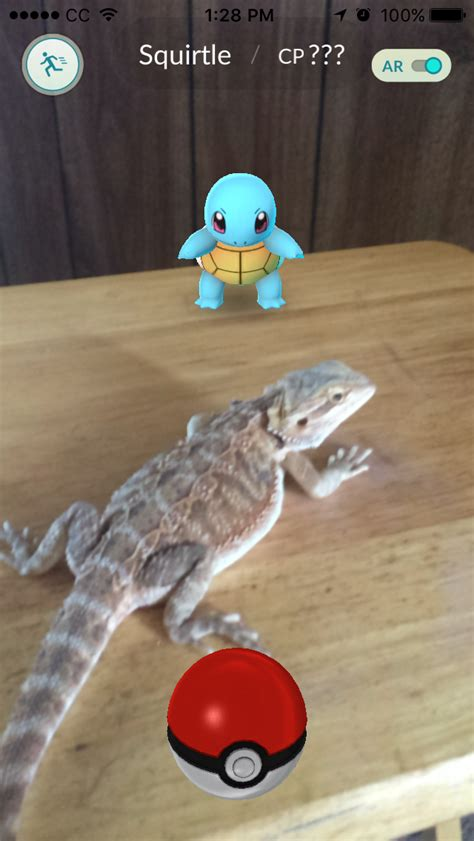 how often do bearded dragons go to the bathroom bearded dragon vs squirtle pok 233 mon go know your meme
