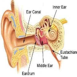 home remedies for ear congestion 5 herbal remedies to get rid of ear congestion