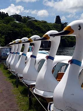swan boats japan 24 best images about odette and odile on pinterest