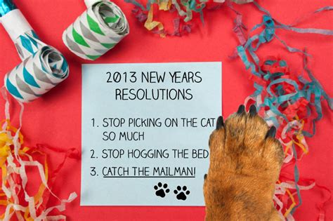 Way Better Than New Years Resolutions 2 by Resolutions To Be A Better Pet Parent In 2013 Best