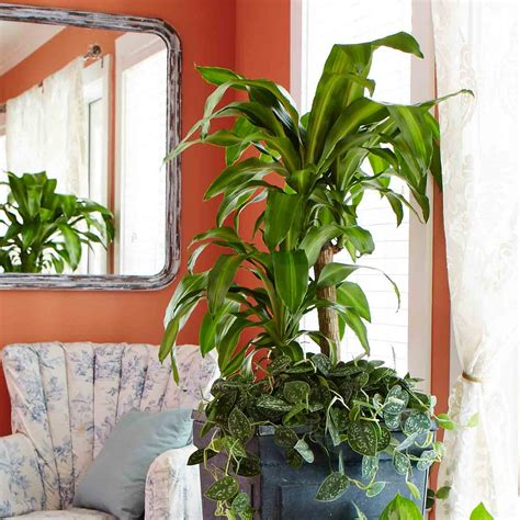 good houseplants for low light 10 best low light houseplants costa farms