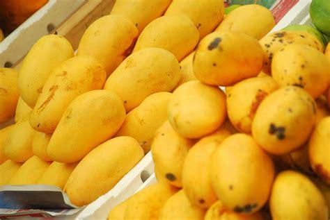 Fruit Mango going mangoes for pakistan pakistan insider