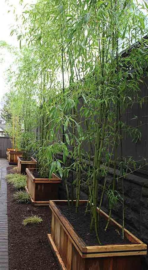 plant bamboo in galvanized tubs with wheels to make it