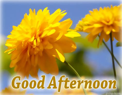 good afternoon best pics gifs and wishes