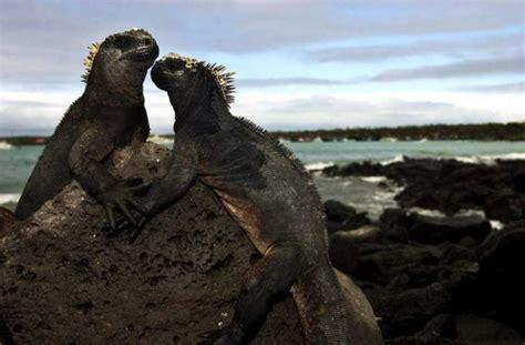Imagenes Animales Galapagos | animales salvajes animales de galapagos
