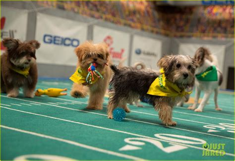 puppy bowl puppies 2017 puppy bowl 2017 meet the dogs the more photo 3853463 2017