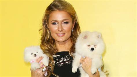 Hang A Chandelier Paris Hilton S Dogs Live In Lavish Doghouse Mansion