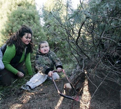 cut your own christmas trees abundant but consumers might