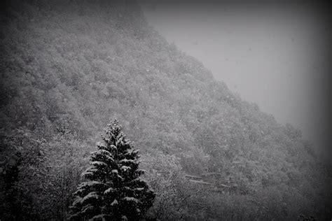 Imagenes Invierno Blanco Y Negro | imagen de blanco y negro monta 241 a nieve invierno pino