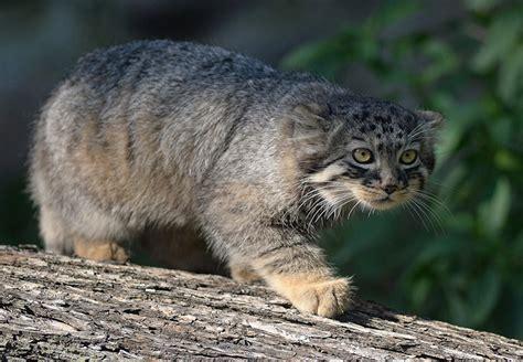 imagenes de animales raros en el mundo en peligro de extinci 243 n los animales m 225 s raros del mundo