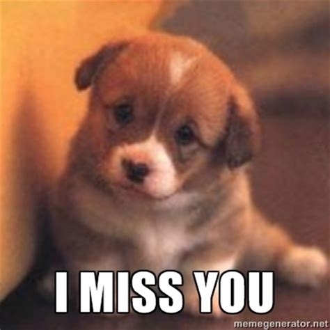 Miss You Meme - i miss you puppy meme google search animals are