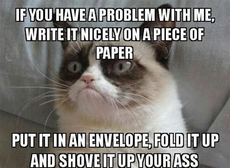 Fuck You Cat Meme - 1000 ideas about cats funny sayings on pinterest cute