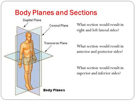 body planes and sections human anatomy and physiology i ppt video online download