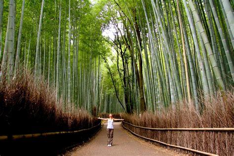 imagenes bambu japones la sabidur 237 a del bamb 250 japon 233 s revista ahora