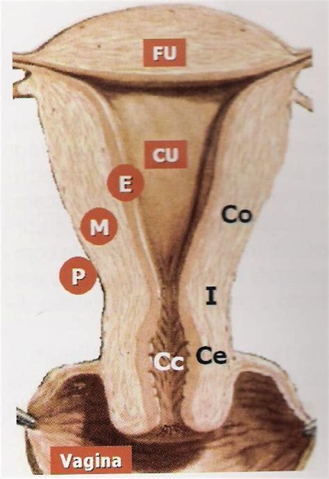 portio uterina prevenzione oncologica displasia cin giuseppe scaglione