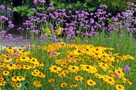 You To See Flower Garden Plants You Can See Through 171 Whole Gardening