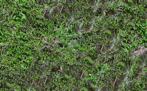 Ground moss texture seamless 13179