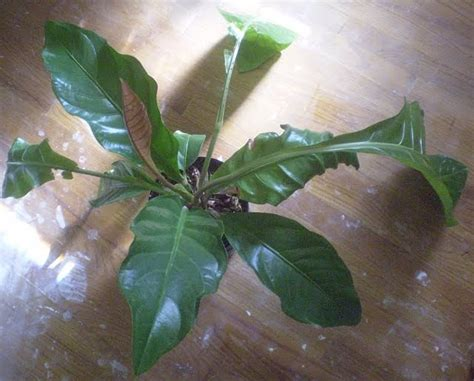 pictures of house plants leaves plants are the strangest list houseplants with large broad leaves