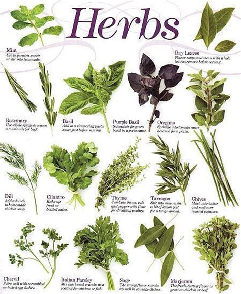 herb chart kitchen herbs reference chart the healing herb garden