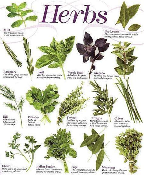 herb chart kitchen herbs reference chart the healing herb garden the secret moon garden